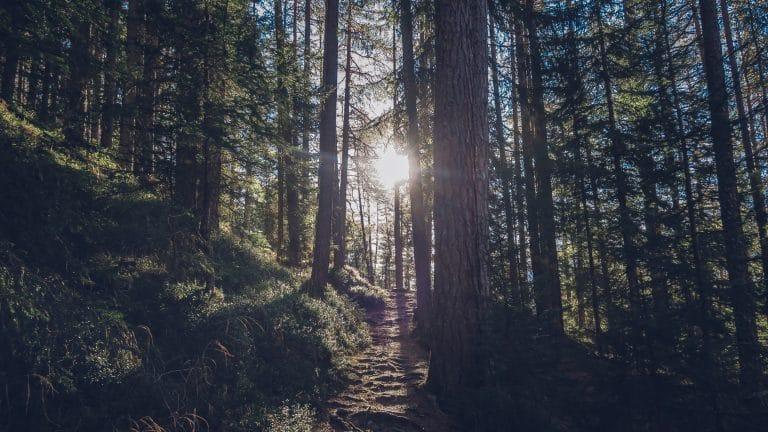 Mitten im Waldviertel